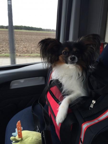 Oskar fährt nach Berlin